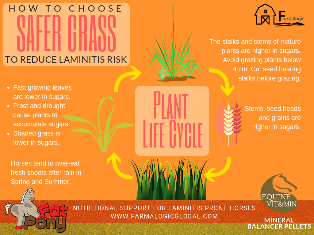 Safer Grass plant life cycle FP