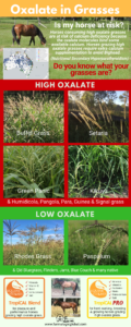 Common high oxalate grasses in horse paddocks.